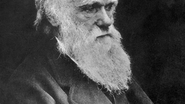 Charles Darwin's lost essay on vampires   TV Characters   Pinterest