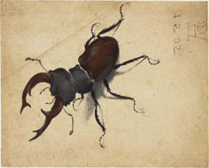 detailed drawing of a beetle on parchment.