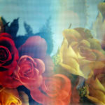 close up image of pink yellow and orange roses.