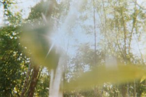 abstract and fuzzy photo of a forest shot through with light