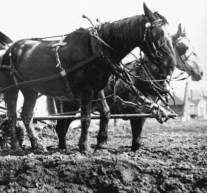 Horses_and_delivery_wagon_stuck_in_the_mud