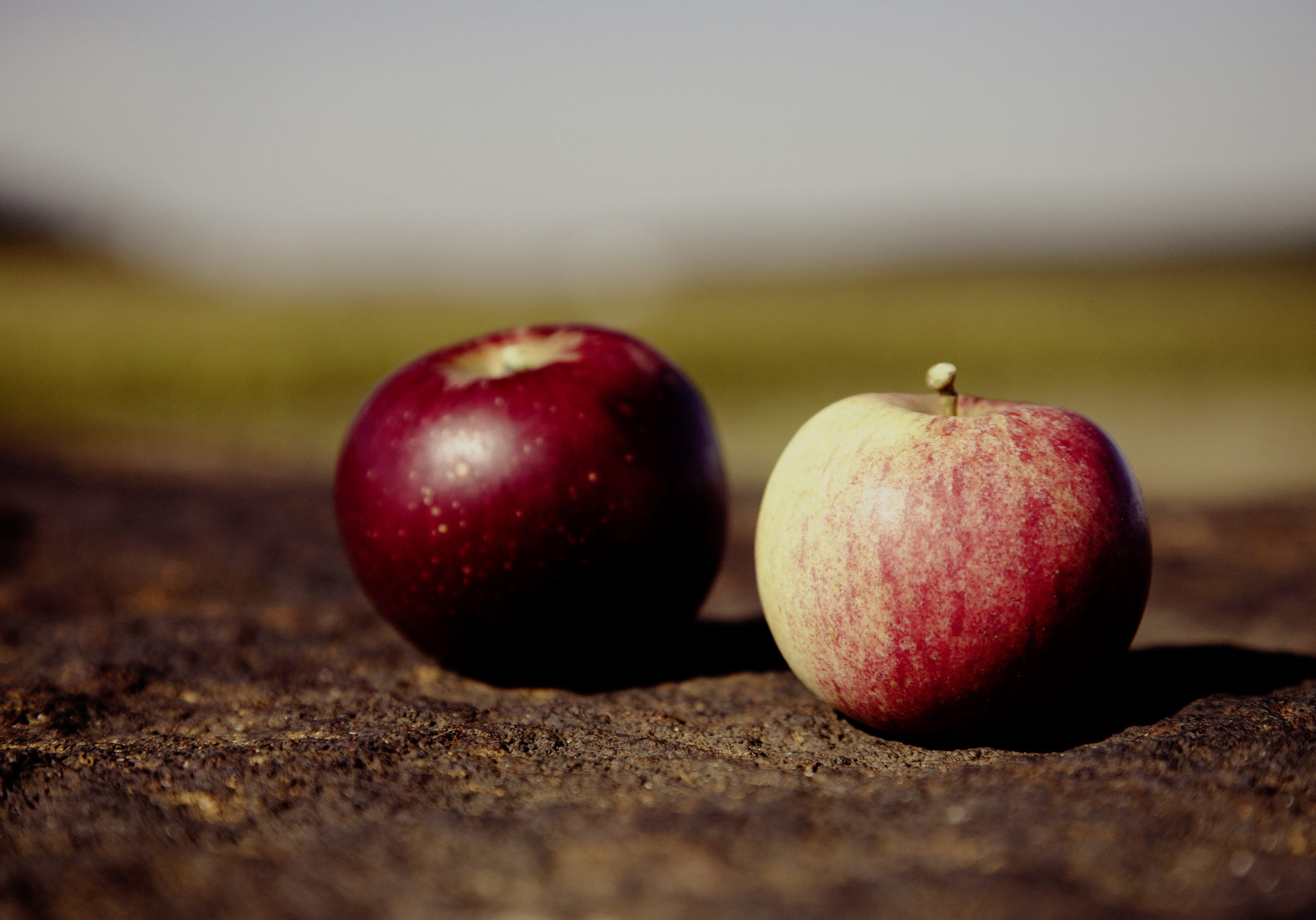 two apples sitting on the dark earth. the one on the left is dark red, like blood, and the one on the right is green and red and streaked with color.