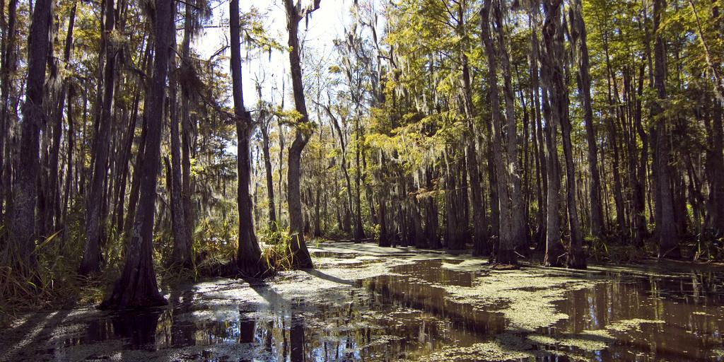 bayou river