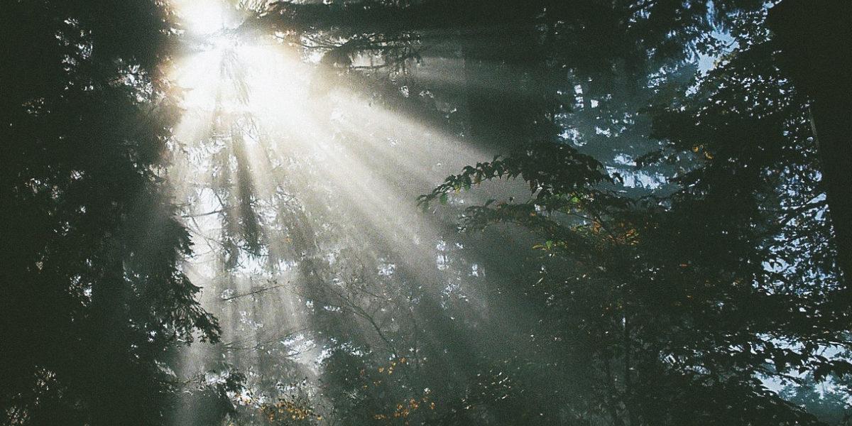 Autumn Sun Rays by Holly Lay on flickr