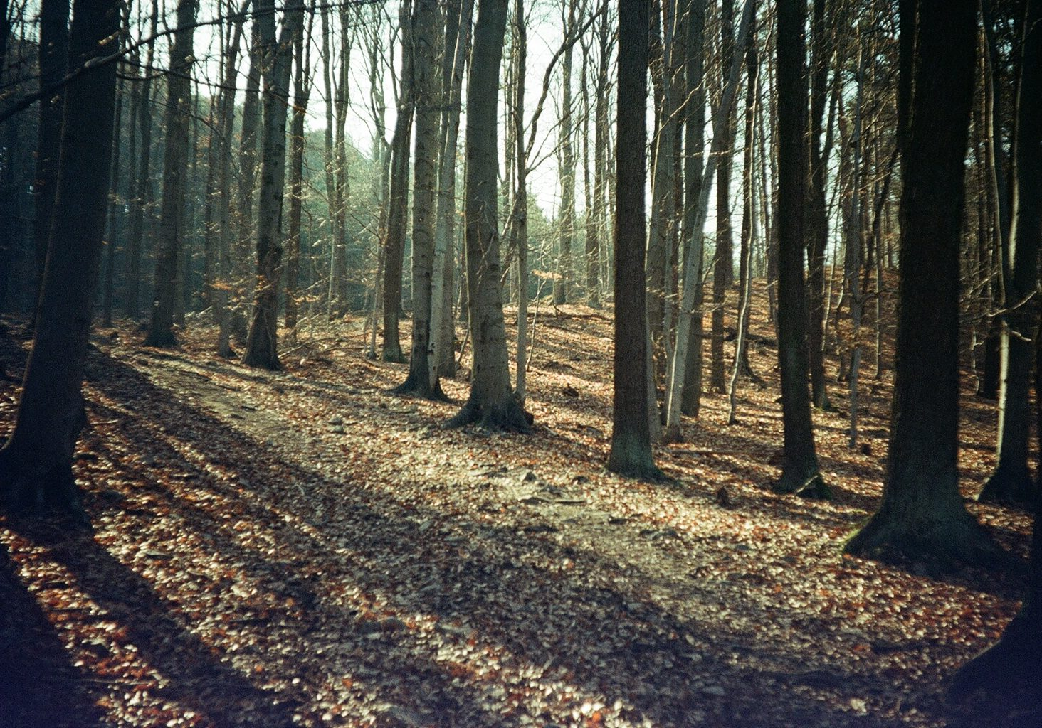 forest by Marketa on flickr