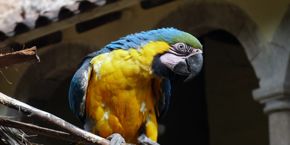 parrot by karlnorling on flickr