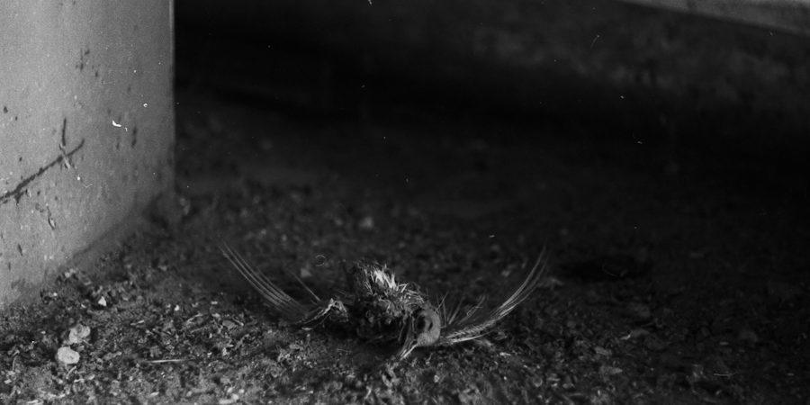 untitled dead bird by Dmitriy Fokeev on flickr