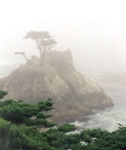 trees coast