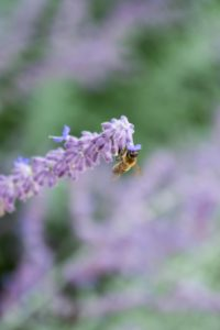 Glen Workshop Bob Denst lavender and bee