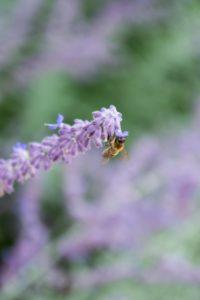 Glen Workshop Bob Denst lavender and bee