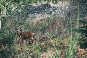 deer Photo by Paul Jarvis _ Unsplash