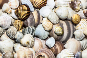 shells by Sole Perez on flickr