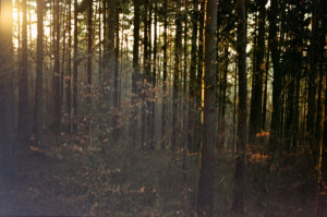 woods-by-marketa-on-flickr