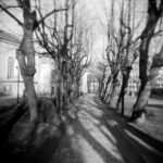 image of a walkway flanked by tall trees that cast their shadow on the ground, old and ornate looking stone houses stand sternly behind the row of trees.
