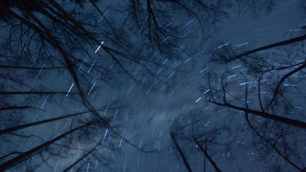 night forest stars by colin hansen on flickr