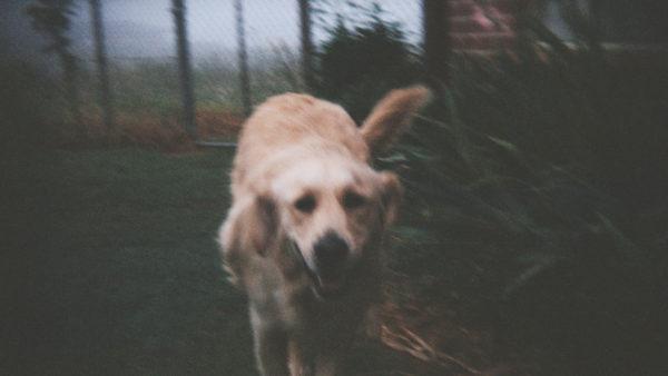 dog named honey by tim on flickr