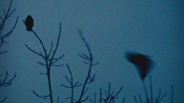 craig-pennington-birds-on-flickr