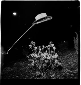 black and white film image of a bowler hat suspended over a bed of tall daisies