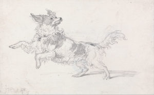 Drawing of a dog with its front paws off the ground. The dog is looking backwards slightly, and its tail is up.