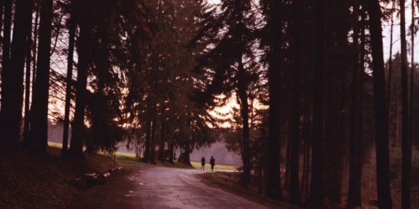 two people walking on a path in the woods, on the cusp of the open edge of the trees that are purple from the late dusk.
