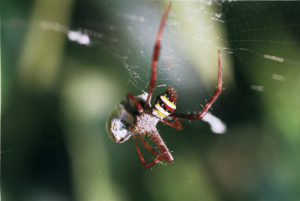 image of a large spider dangling from its web.