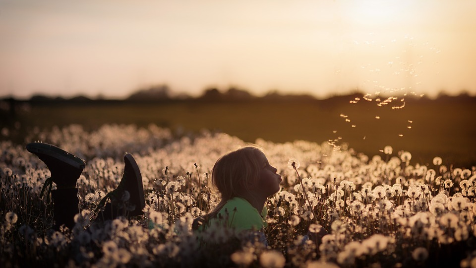 child blowing dandelion in sunset