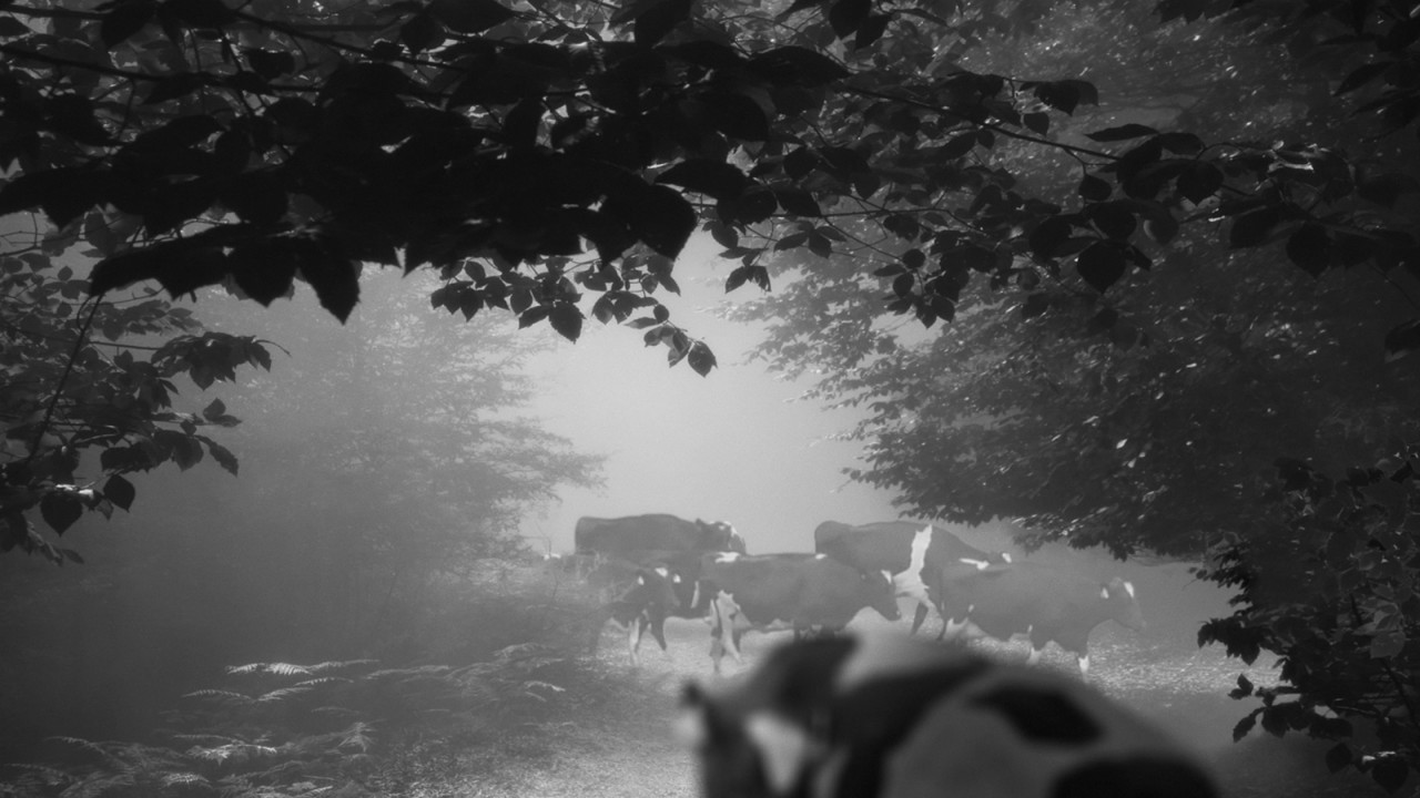 still from 24 Frames by filmmaker Abbas Kiarostami