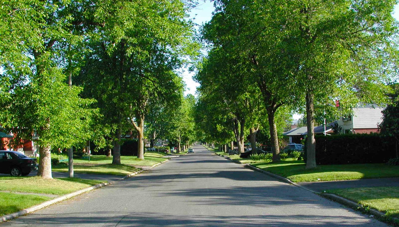 empty suburban street