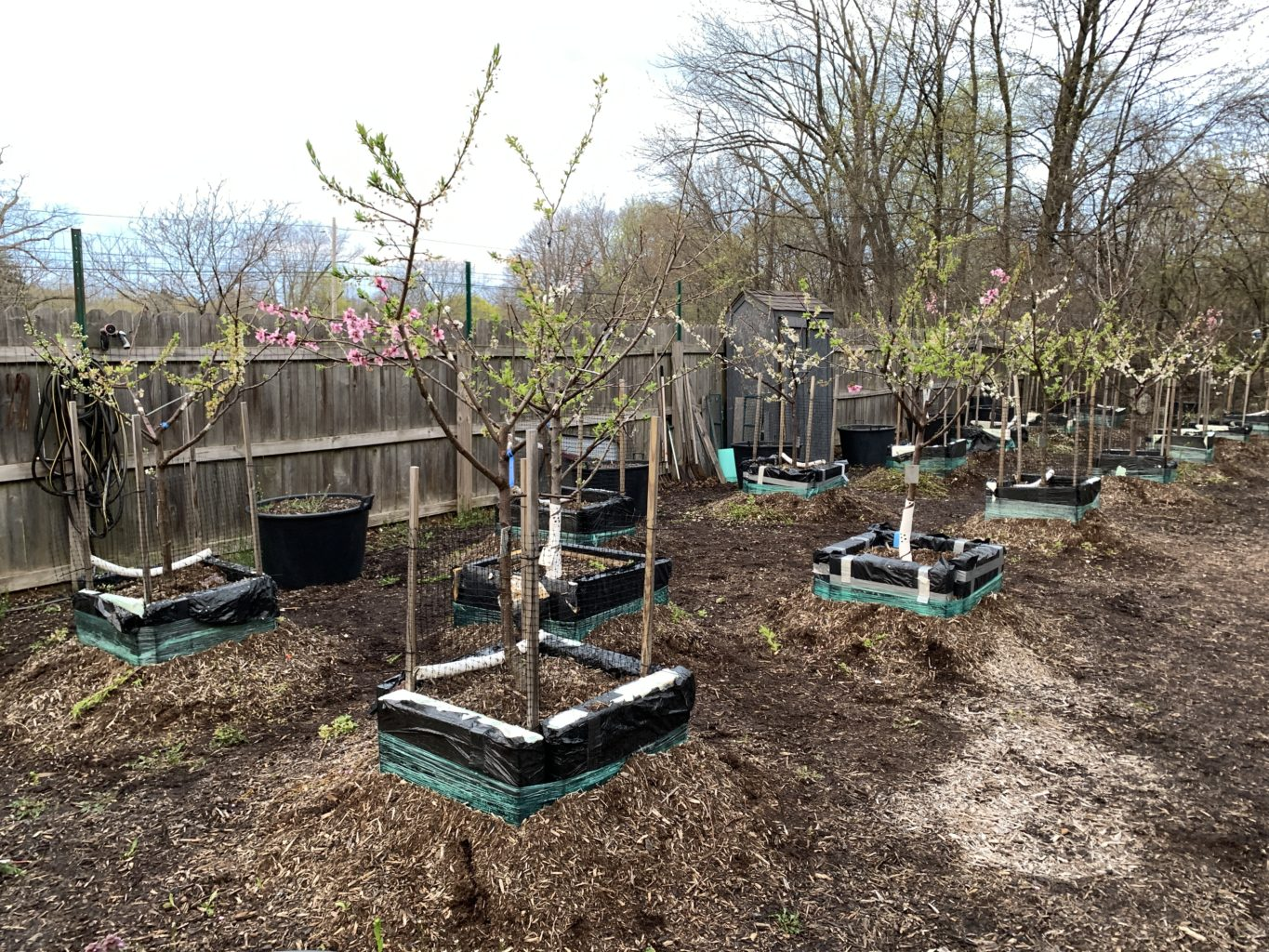 "Week 10: <em>Outside</em>, ""Nursery After Grafting,"" Sam van Aken, June 12, 2020"